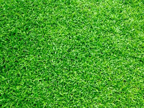 kunstgras Gras en Groen